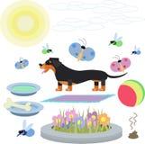 一条达克斯猎犬狗的抽象例证与玩具的在白色背景 免版税库存图片