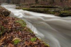 一条连续河流经森林 免版税库存照片