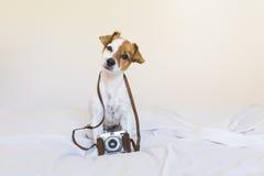 一条逗人喜爱的幼小小狗的画象与葡萄酒照相机 S 库存图片