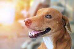 一条逗人喜爱的棕色狗的画象 库存图片