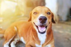 一条逗人喜爱的棕色狗的画象 库存照片