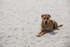 一条逗人喜爱的狗微笑和坐白色沙子海滩 免版税库存照片