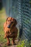 一条逗人喜爱的狗的画象在日落的 免版税库存照片