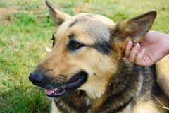 一条逗人喜爱的狗的纵向 免版税库存图片