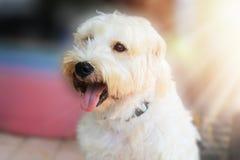一条逗人喜爱的白色狗的画象 图库摄影