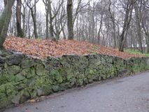 一条道路在一个五颜六色的秋天公园 图库摄影