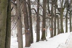 一条道路在一个古老公园,鸽子的,高大的树木一个鸟饲养者 免版税库存照片