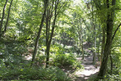 一条道路在一个密集的山森林里 免版税库存图片