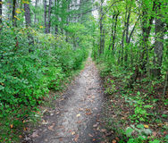一条道路在一个密集的森林里 库存照片