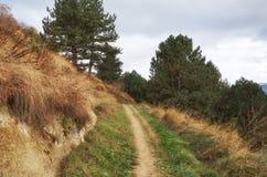 一条道路在一个狂放的山秋天森林里 免版税库存图片