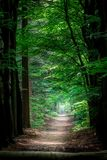 一条道路在一个绿色森林里 图库摄影