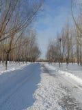 一条道路在公园在冬天 免版税库存图片