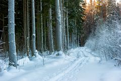 一条道路在冬天森林,积雪的分支的看法里 库存照片