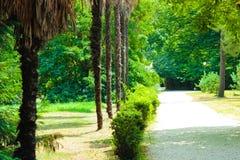 一条道路在南部的公园 免版税库存图片