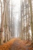 一条道路在有早晨薄雾的森林 免版税图库摄影