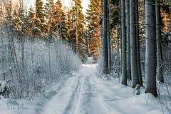 一条道路在树a冬天森林和积雪的分支里  图库摄影