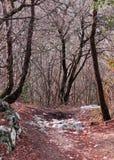 一条道路在森林在冬天 图库摄影