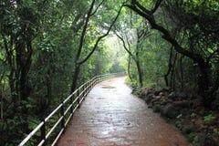 一条道路在森林地 免版税库存图片