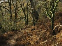 一条道路在森林里 免版税库存图片