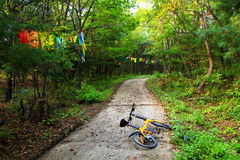 一条道路在森林里 免版税库存照片