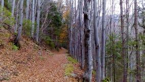 一条道路在森林里 库存图片