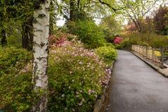 一条道路在波特兰` s克里斯特尔里弗杜鹃花庭院里 免版税库存图片