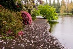 一条道路在波特兰` s克里斯特尔里弗杜鹃花庭院里 库存图片
