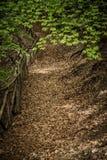 一条道路在用叶子盖的森林里 免版税图库摄影