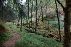 一条道路在用青苔盖的森林里,在夏天 库存图片