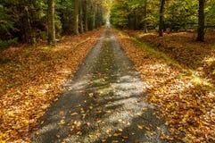 一条道路在秋天森林里 库存图片