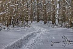 一条道路在积雪的森林里 免版税库存照片