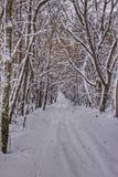一条道路在积雪的森林里 库存图片