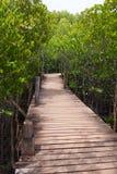 一条道路的木桥穿过自然美洲红树森林,自然本底的 库存照片