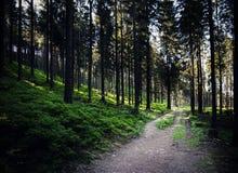 一条道路穿过一个密集的森林 库存照片