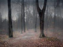 一条道路穿过一个神秘的有薄雾的森林 免版税库存照片