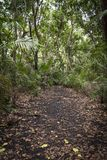 一条道路穿过密林 免版税库存照片
