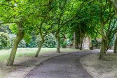 一条道路穿过导致门的树 库存图片