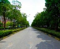 一条道路穿过树两行  免版税库存照片