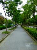 一条道路穿过树两行  免版税图库摄影