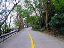一条道路穿过树两行  库存图片