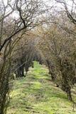 一条道路穿过树 免版税图库摄影