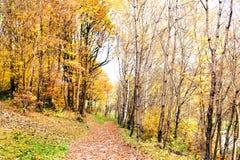 一条道路穿过秋天森林 免版税库存照片