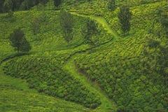一条道路穿过茶园 库存图片