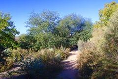一条遮荫沙漠道路 免版税库存照片