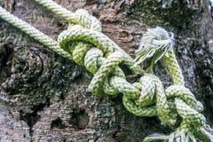 一条重绳索的很多结在云杉木吠声的背景的  图库摄影