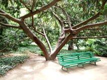 一条长凳在一棵树下在庭院里 图库摄影