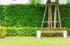 一条长凳在一棵树下在庭院里 免版税库存图片