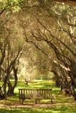 一条长凳在有不可思议的照明设备的森林里 库存图片