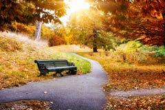 一条长凳在格林威治公园,伦敦 免版税库存照片