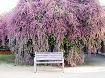 一条长凳有美好的紫色花背景 库存图片